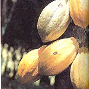 Gov't Must Increase Prices Of Cocoa - Akoto Osei